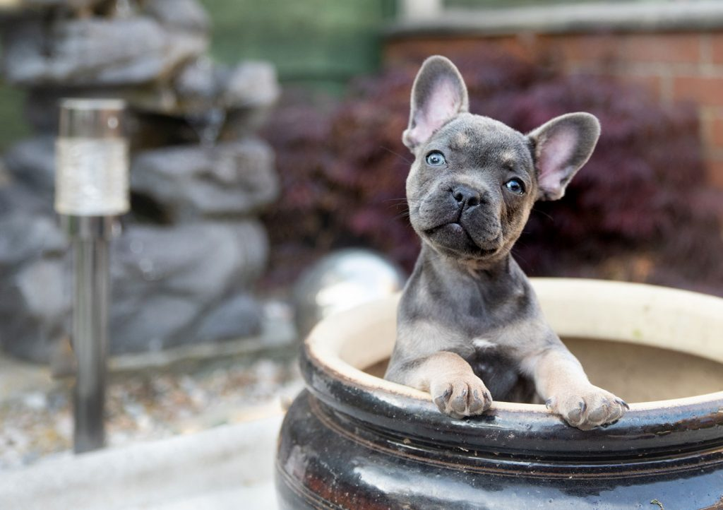 puppy in a tub photo portrait
