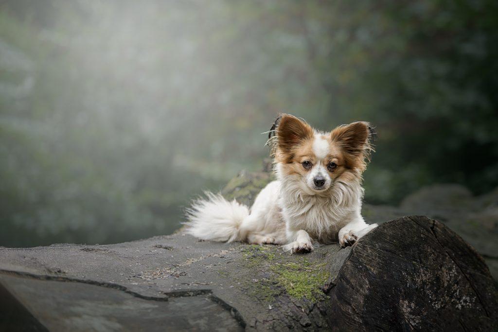 Pet portrait Manchester